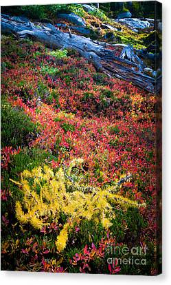 Enchanted Colors Canvas Print by Inge Johnsson