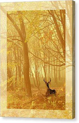 Canvas Print featuring the photograph Enchanted Forest by Chris Armytage