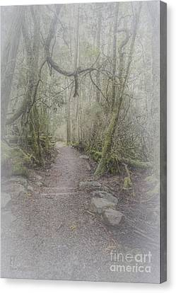 Enchanted Forest Canvas Print by Elaine Teague