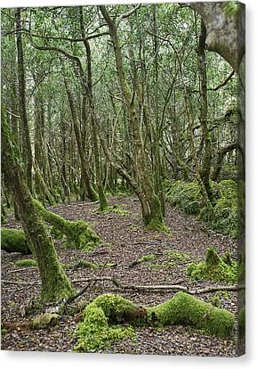 Canvas Print featuring the photograph Enchanted Forest by Hugh Smith