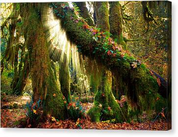 Mossy Canvas Print - Enchanted Forest by Inge Johnsson