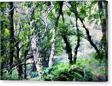 Enchanted Forest. The Kingdom Of Thetrees. Glendalough. Ireland Canvas Print by Jenny Rainbow