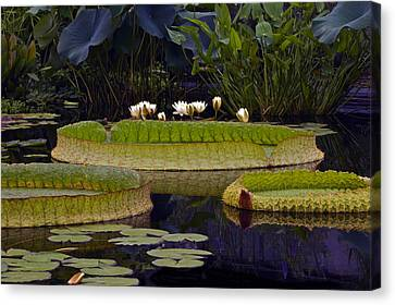 Enchanted Water Garden Canvas Print by Byron Varvarigos