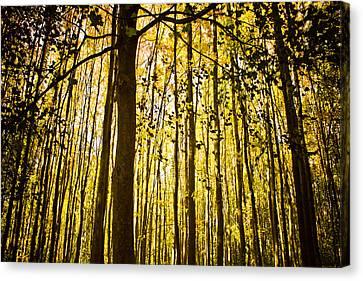 Enchanted Woods Canvas Print by Sara Frank