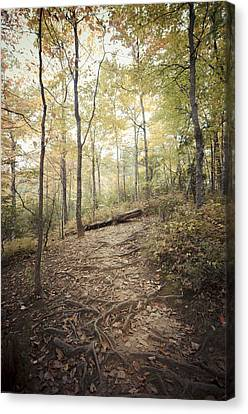 Enchanting Forest Canvas Print by Debbie Karnes