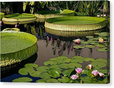 Enchanting Water Garden Canvas Print by Byron Varvarigos