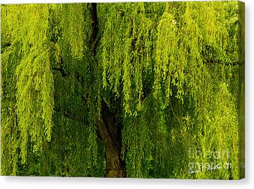 Enchanting Weeping Willow Tree  Canvas Print