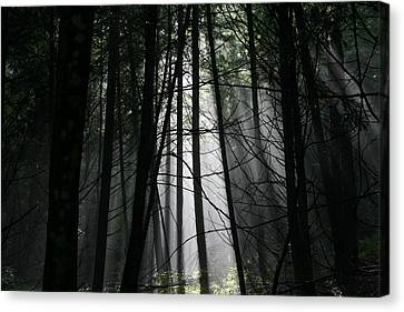 Encounter Of The Vermont Kind No.2 Canvas Print by Neal Eslinger