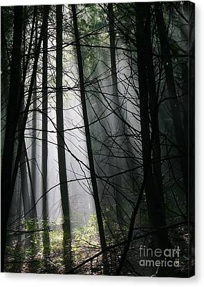 Encounters Of The Vermont Kind  Canvas Print by Neal Eslinger