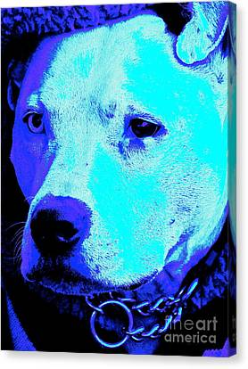 End Dog Fighting  Canvas Print by Q's House of Art ArtandFinePhotography