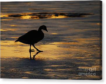 End Of A Beautiful Day Canvas Print by Joy Bradley