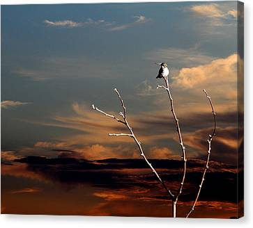 Canvas Print featuring the photograph End Of The Day by John Freidenberg