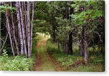 End Of The Road Canvas Print by Tam Graff