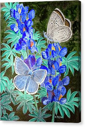Endangered Mission Blue Butterfly Canvas Print