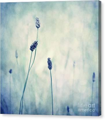 Endearing Canvas Print by Priska Wettstein
