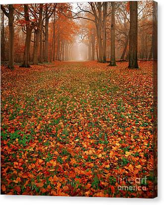 Endless Autumn Canvas Print by Jacky Gerritsen