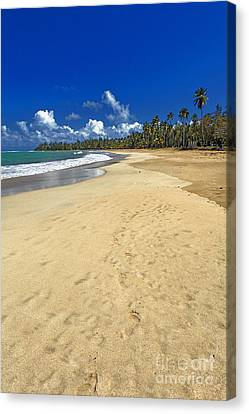 Endless Caribbean Beach Canvas Print by George Oze