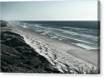 Sea Fern Canvas Print - Endless Sand Dune Beach - Southern Oregon by Daniel Hagerman