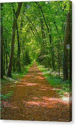 Endless Trail Into The Forest Canvas Print