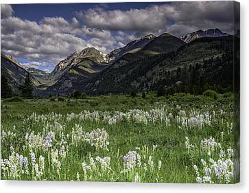 Endo-valley Meadow  Canvas Print by Tom Wilbert