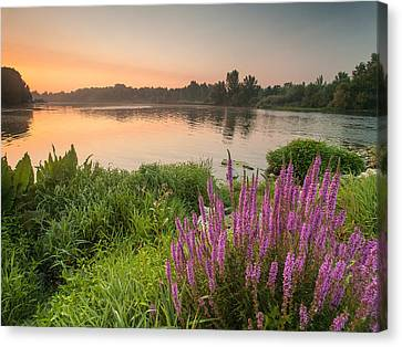 Energize Canvas Print by Davorin Mance