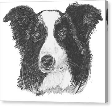 English Border Collie Canvas Print by Catherine Roberts