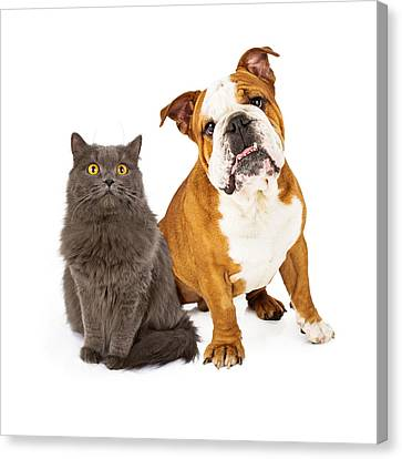 English Bulldog And Gray Cat Canvas Print by Susan Schmitz