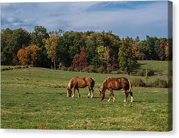 Enjoying The Colors Canvas Print
