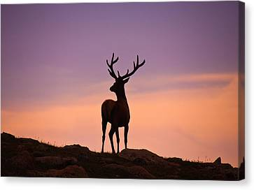 Enjoying The View Canvas Print by Darren  White