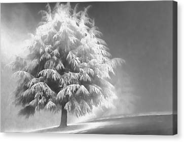 Enlightened Tree Canvas Print by Don Schwartz