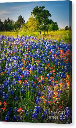 Ennis Bluebonnets Canvas Print by Inge Johnsson