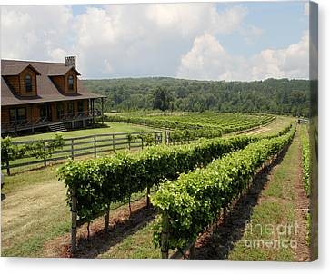 Vine Grapes Canvas Print - Enoch's Vineyard by Paul Anderson