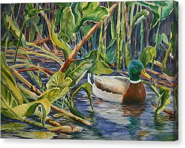 Canvas Print featuring the painting Environmentally Sound - Mallard Duck by Roxanne Tobaison