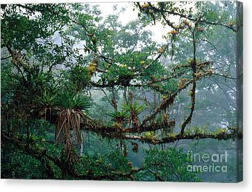 Epiphytes Canvas Print by Gregory G. Dimijian, M.D.