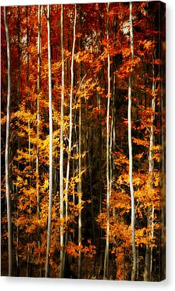 Canvas Print featuring the photograph Equilibre by Philippe Sainte-Laudy