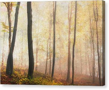 Equilibrium Of The Forest In The Mist Canvas Print by Georgiana Romanovna