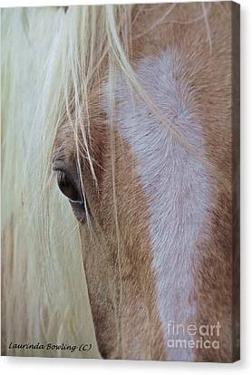 Equine Head Study Canvas Print by Laurinda Bowling