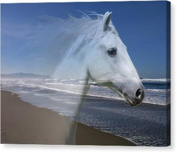 Equine Shores Canvas Print by Athena Mckinzie