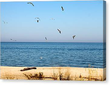 Canvas Print featuring the photograph Erie Birds And Beach by Jay Nodianos