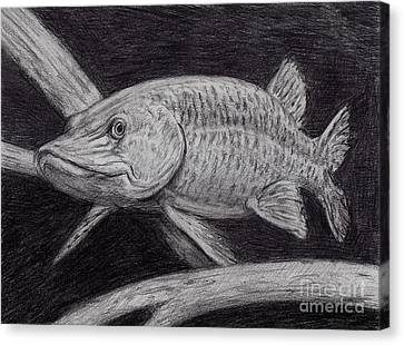 Esox Masquinongy Canvas Print by Larry Green