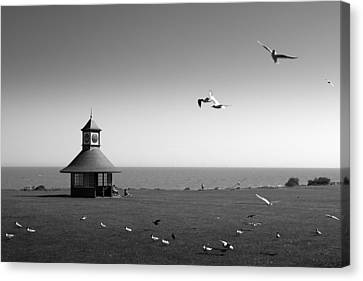 Esplended Gulls Canvas Print by David Davies