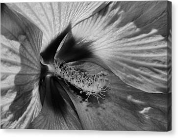 Essence Black And White Canvas Print