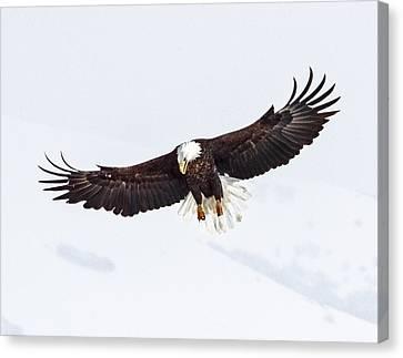 Essence Of Eagle Canvas Print