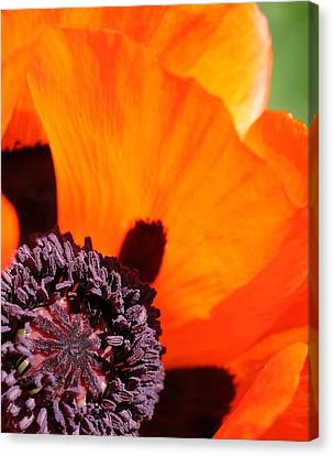 Essence Of Poppy Canvas Print by  Andrea Lazar