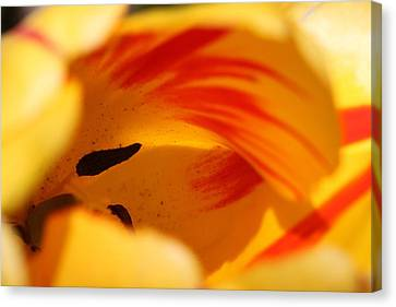 Essence Of Tulip Canvas Print by  Andrea Lazar