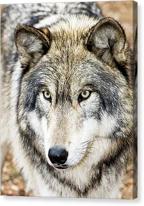 Canvas Print featuring the photograph Essence Of Wolf by Gary Slawsky