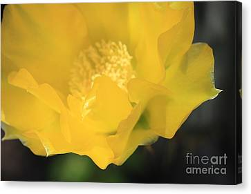 Essence Of Yellow Canvas Print