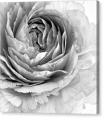 Essence Canvas Print by Priska Wettstein