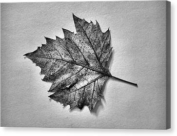 Essence...leaf Exposer Merge Canvas Print by Tom Druin