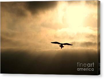 Canvas Print featuring the photograph Eternal White Light by Polly Peacock